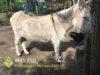 Dierenpolitie treft verwaarloosde ezel aan in Nispen