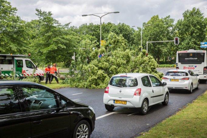 Omgewaaide boom zorgt voor verkeershinder aan Antwerpseweg
