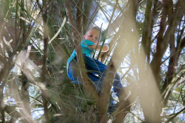 7-jarige jongen door brandweer uit boom gehaald in Roosendaal