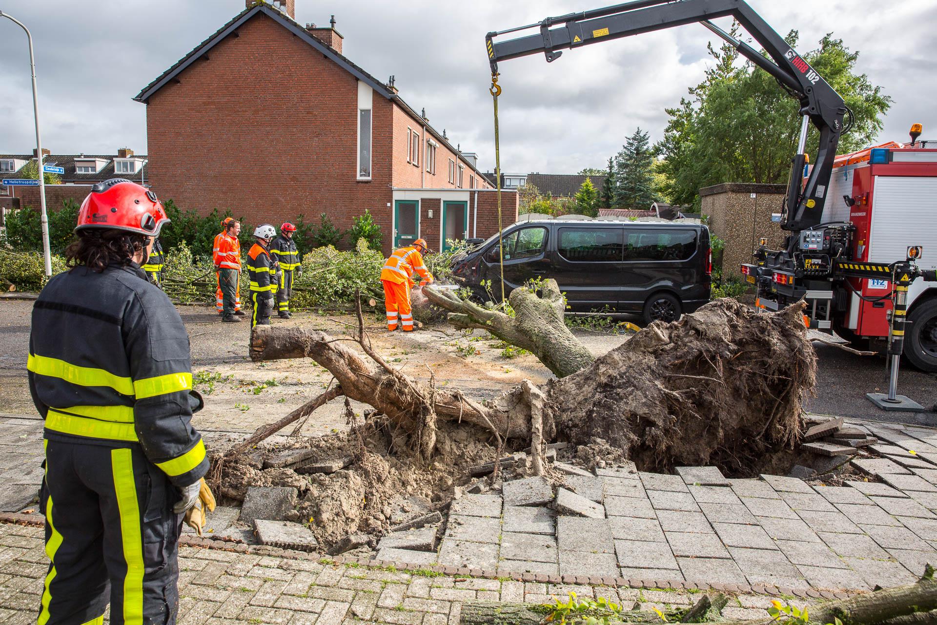 Boom omgewaaid in Roosendaal, bestelbus zwaar beschadigd