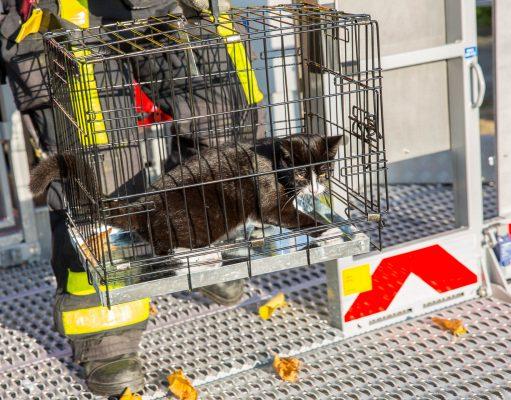 Brandweer haalt kat uit boom in Roosendaal