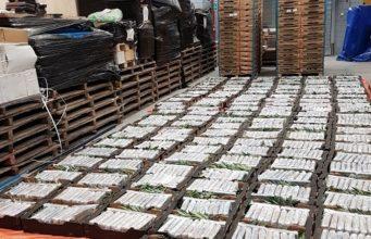 Grote hoeveelheid cocaïne gevonden in loods Oudenbosch