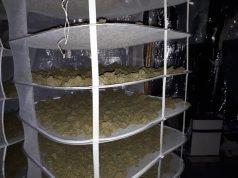 Vier arrestaties na aantreffen hennepdrogerij in Roosendaal