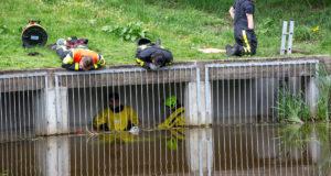 Brandweer redt vier jonge eendjes uit riool in Roosendaal