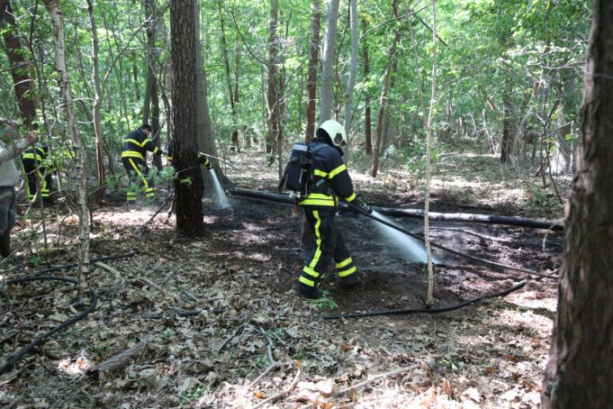 Bosbrand snel onder controle in Wouwse Plantage